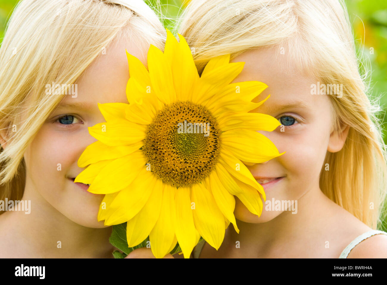 Close-up of pretty twins looking at camera from behind of gaudy sunflower - Stock Image