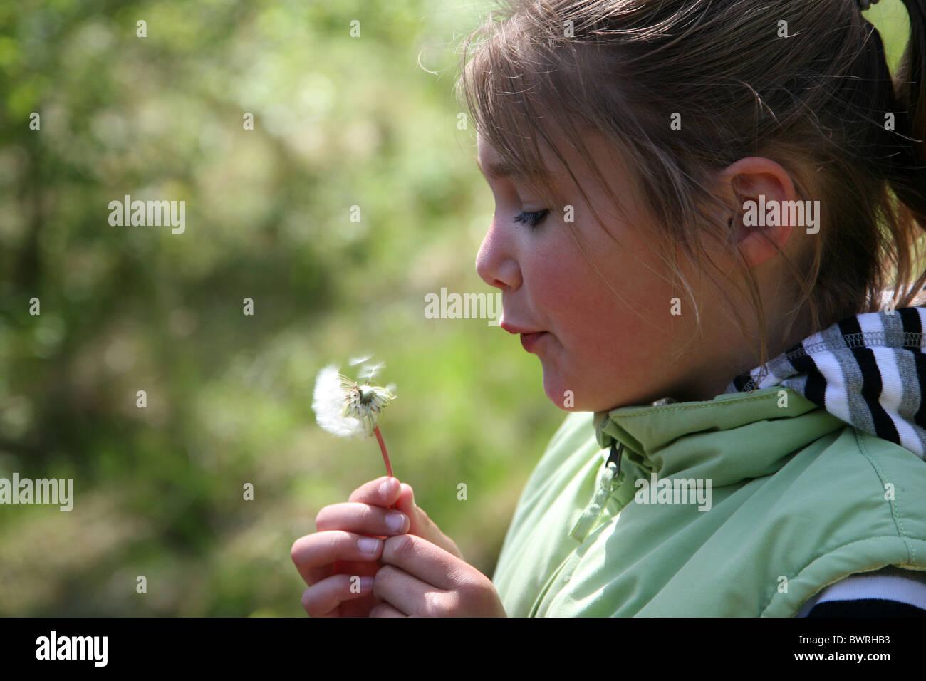 Young girl blowing seed plumes of dandelion, Haamstede, Zealand, Netherlands - Stock Image