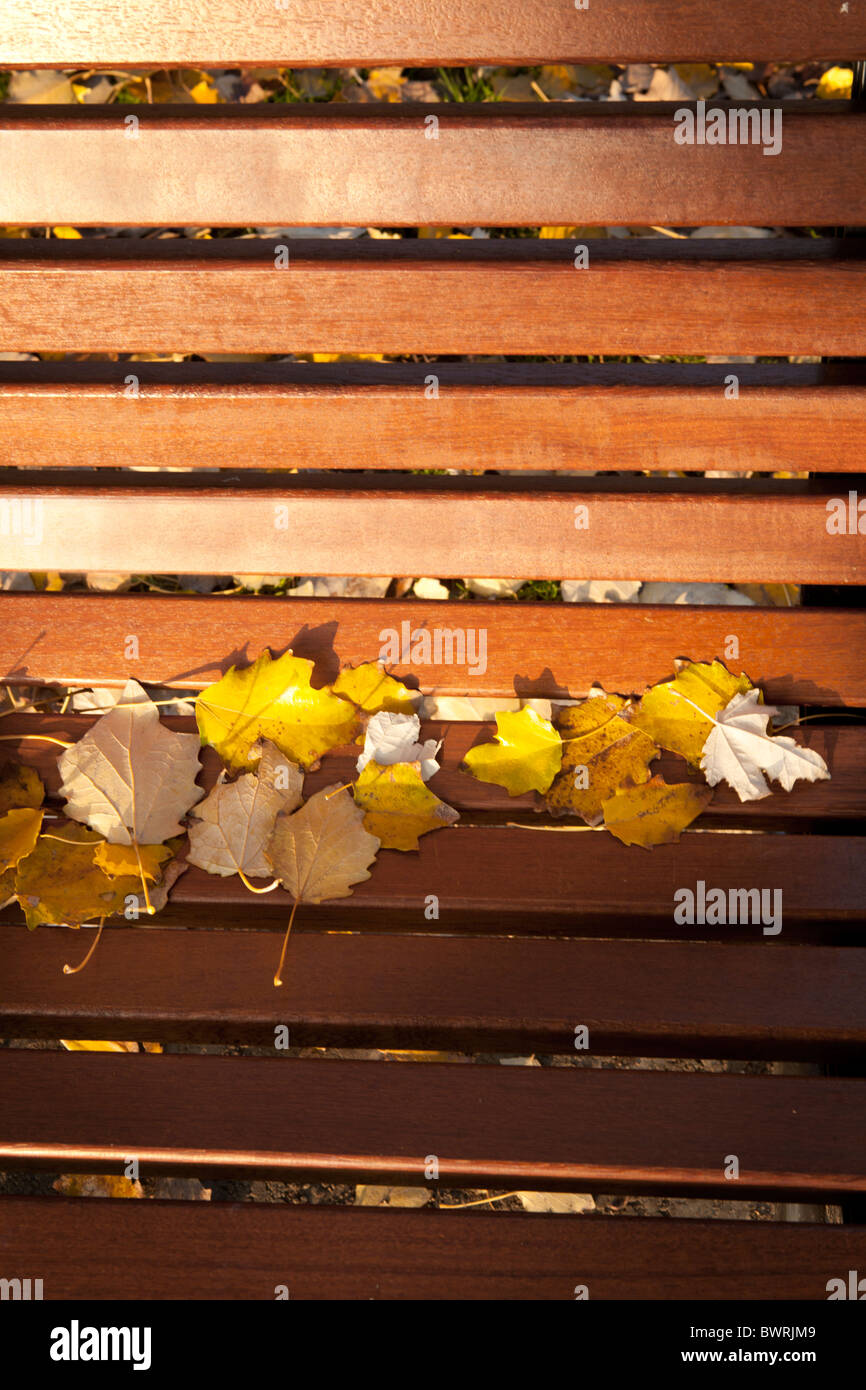 Autumn leaves on a park-bench in Venice. - Stock Image