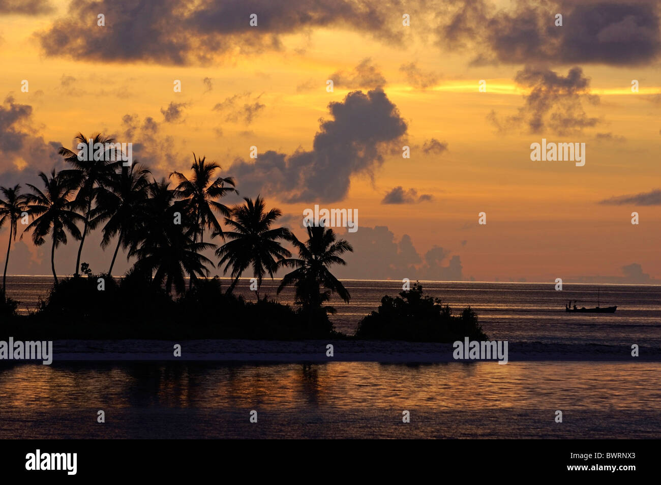 Silhouetted palm trees line the beach at sunrise, Maldives. - Stock Image