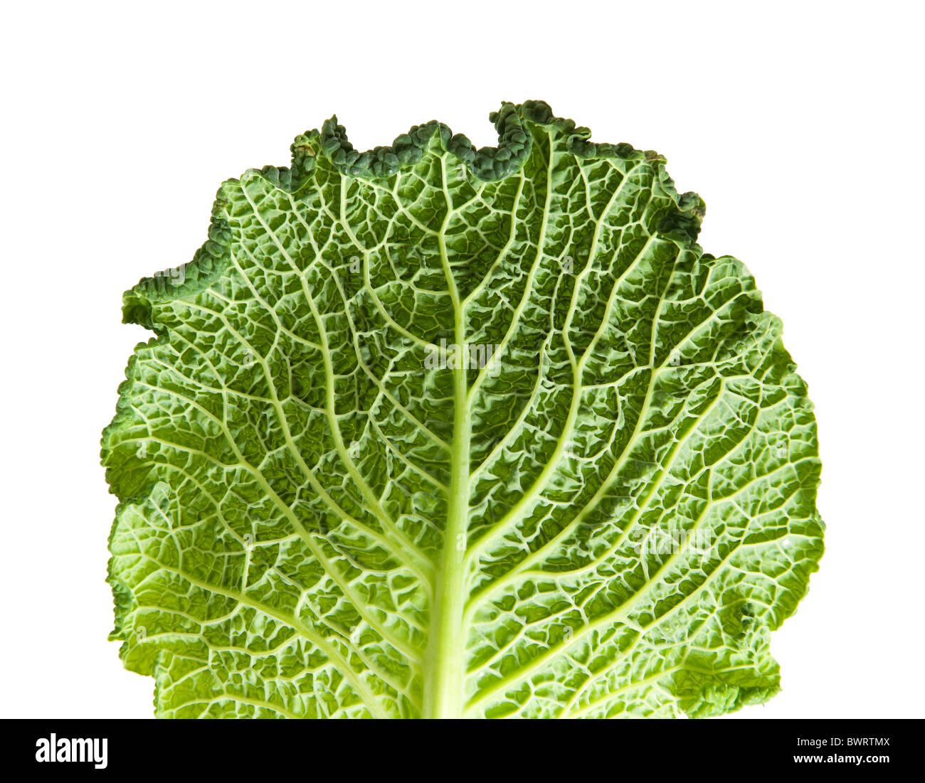 Savoy Cabbage Leaf Isolated On White Background Stock Photo Alamy