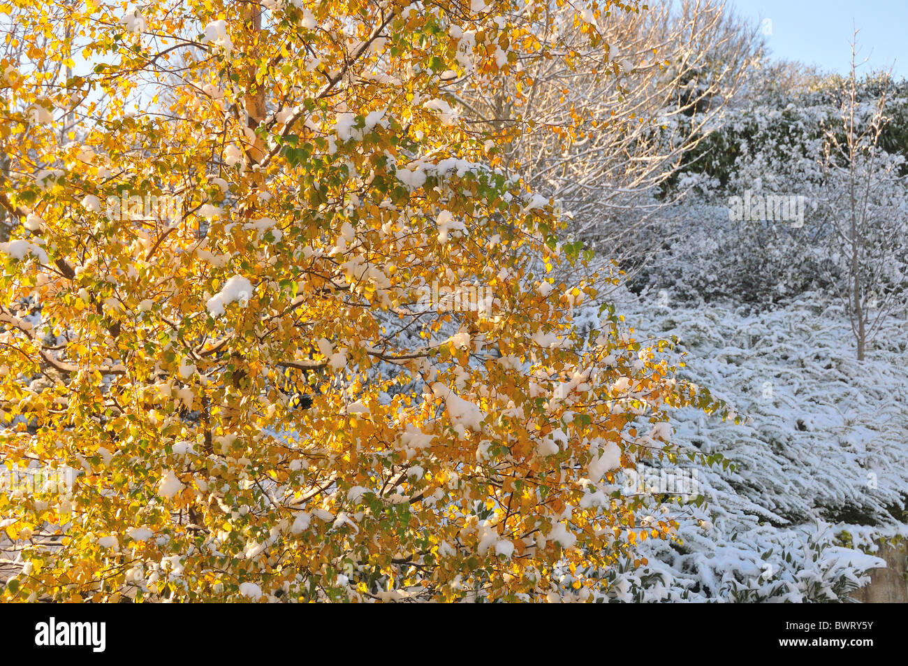 early snow fall in Ireland - Stock Image