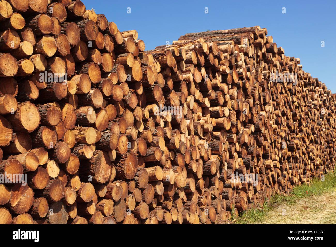 Wood piles near Bohonal de Ibor, Caceres Province, Spain - Stock Image