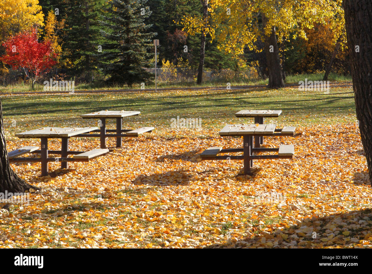 Magnificent Autumn Colours And Park Benches And Picnic Tables In The Caraccident5 Cool Chair Designs And Ideas Caraccident5Info