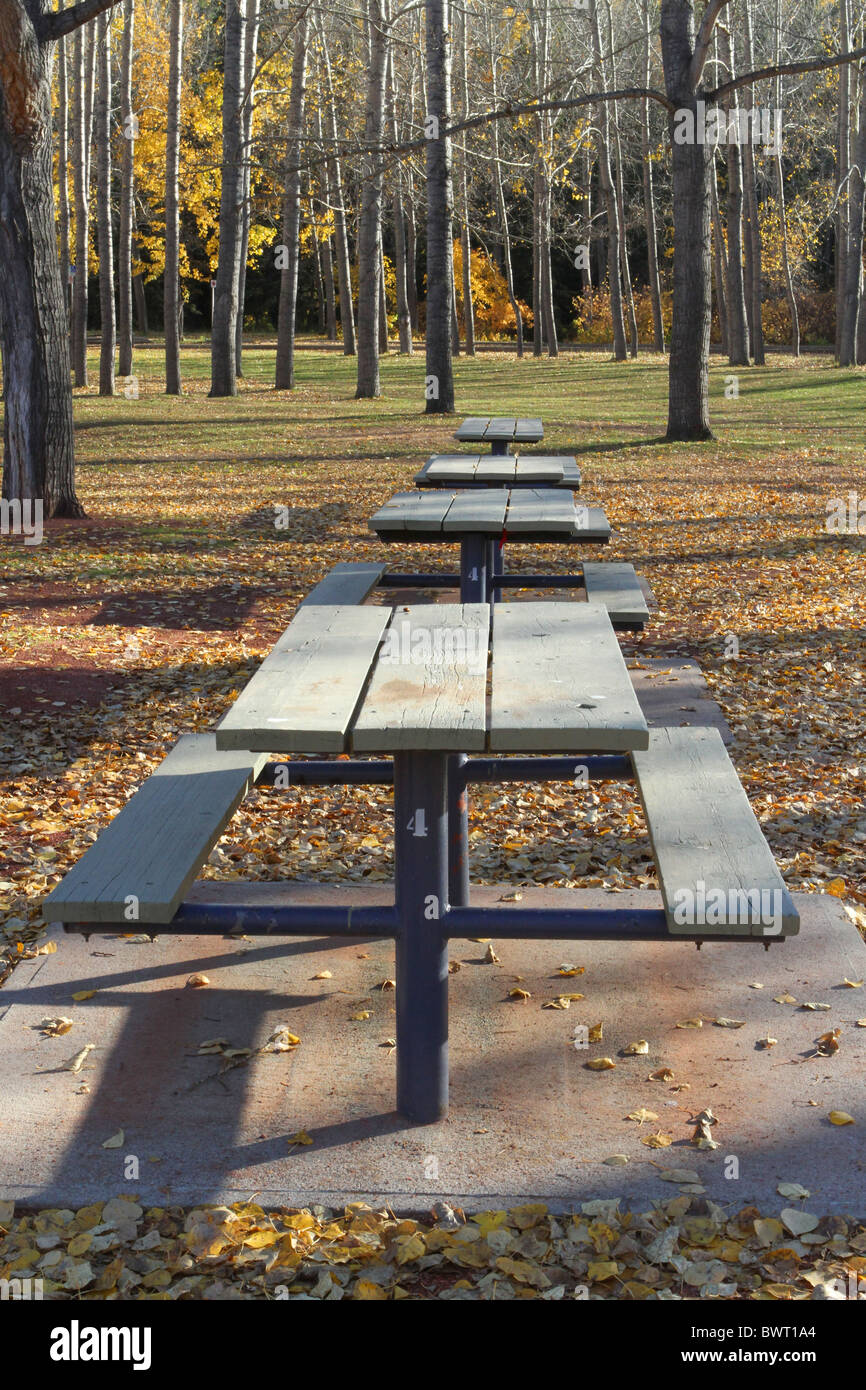 Pleasant Autumn Colours And Park Benches And Picnic Tables In The Caraccident5 Cool Chair Designs And Ideas Caraccident5Info