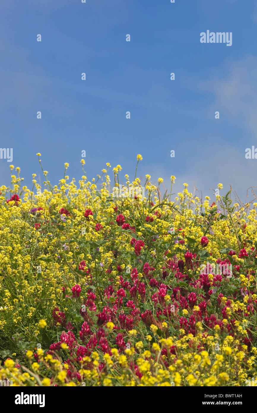 Spring flowers against blue sky with wispy cloud - Stock Image