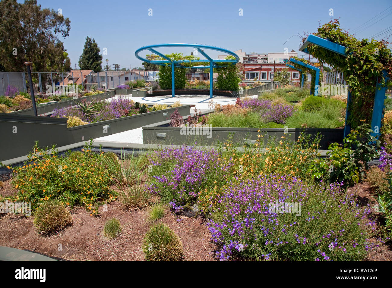 Drought tolerant green roof garden. The Council District 9 Neighborhood City Hall in South Central Los Angeles - Stock Image