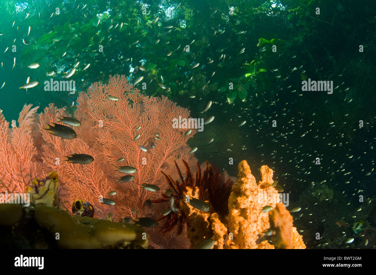 Reef scenic and rainforest above Raja Ampat Indonesia - Stock Image