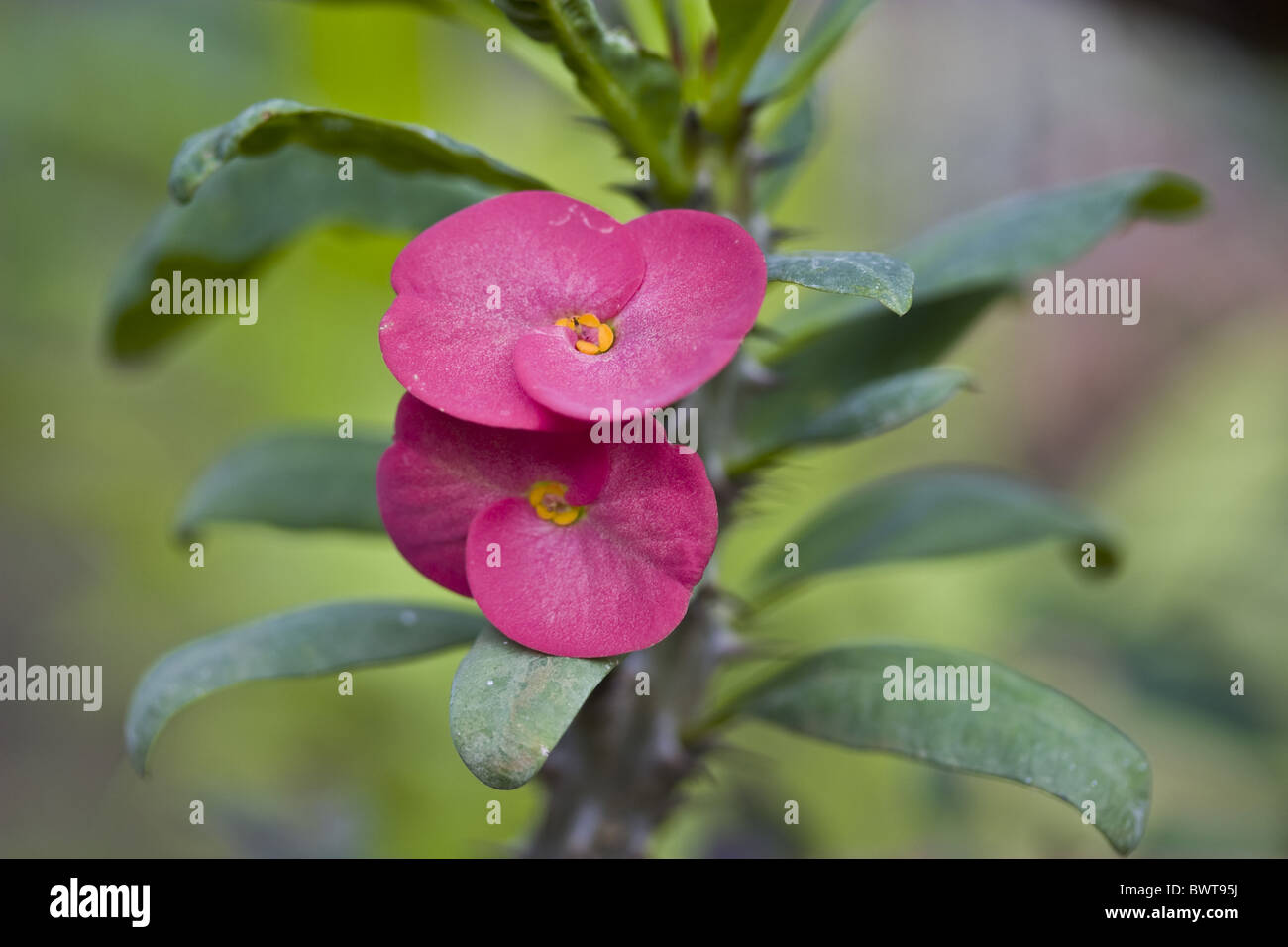 Tropical Plants With Thorns Stock Photos Tropical Plants With