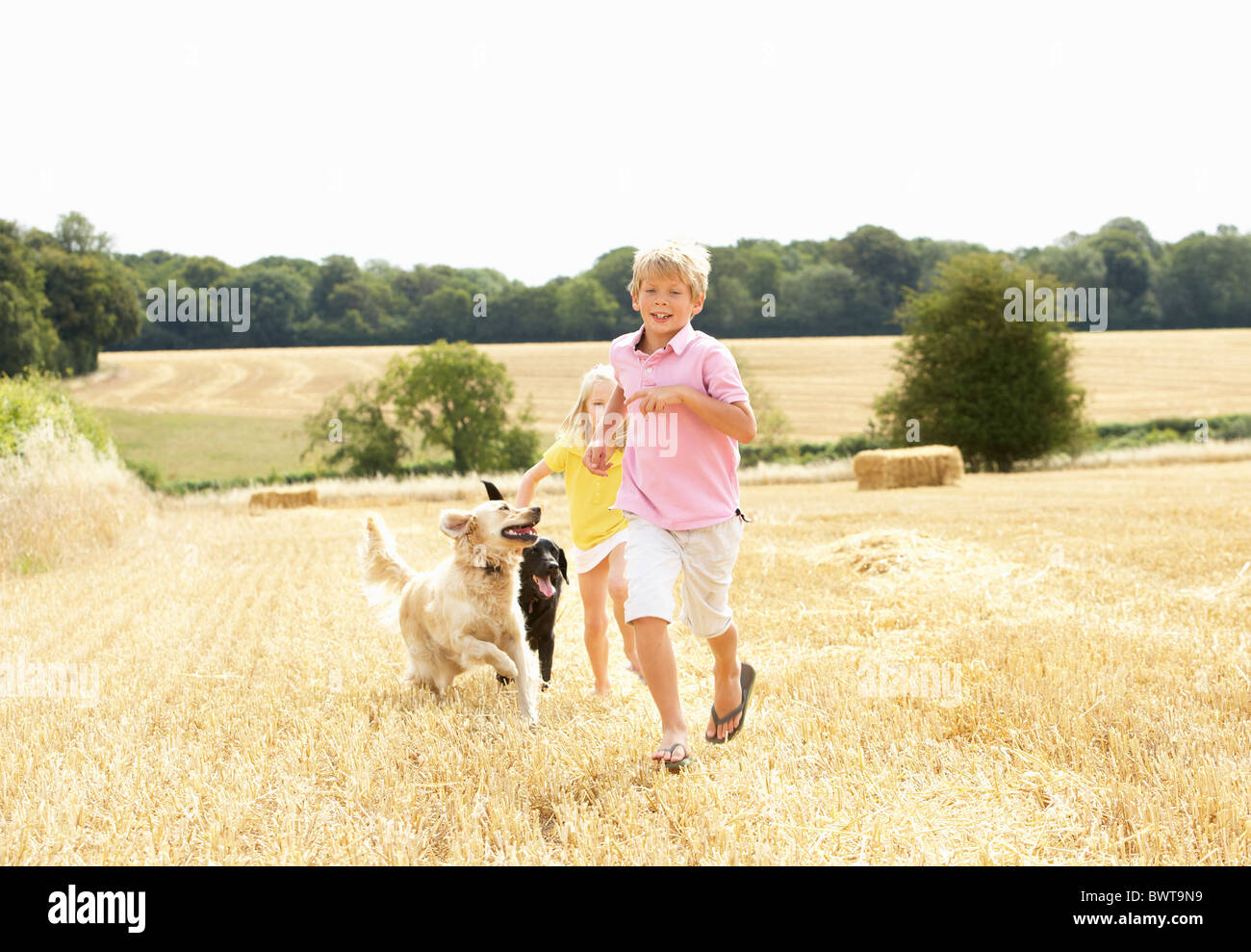 Boy With Dogs Running Through Summer Harvested Field - Stock Image