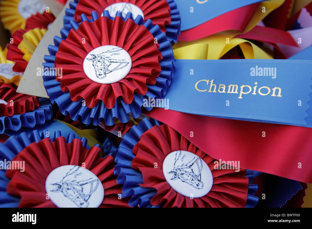 Equestrian champion ribbon - Stock Image