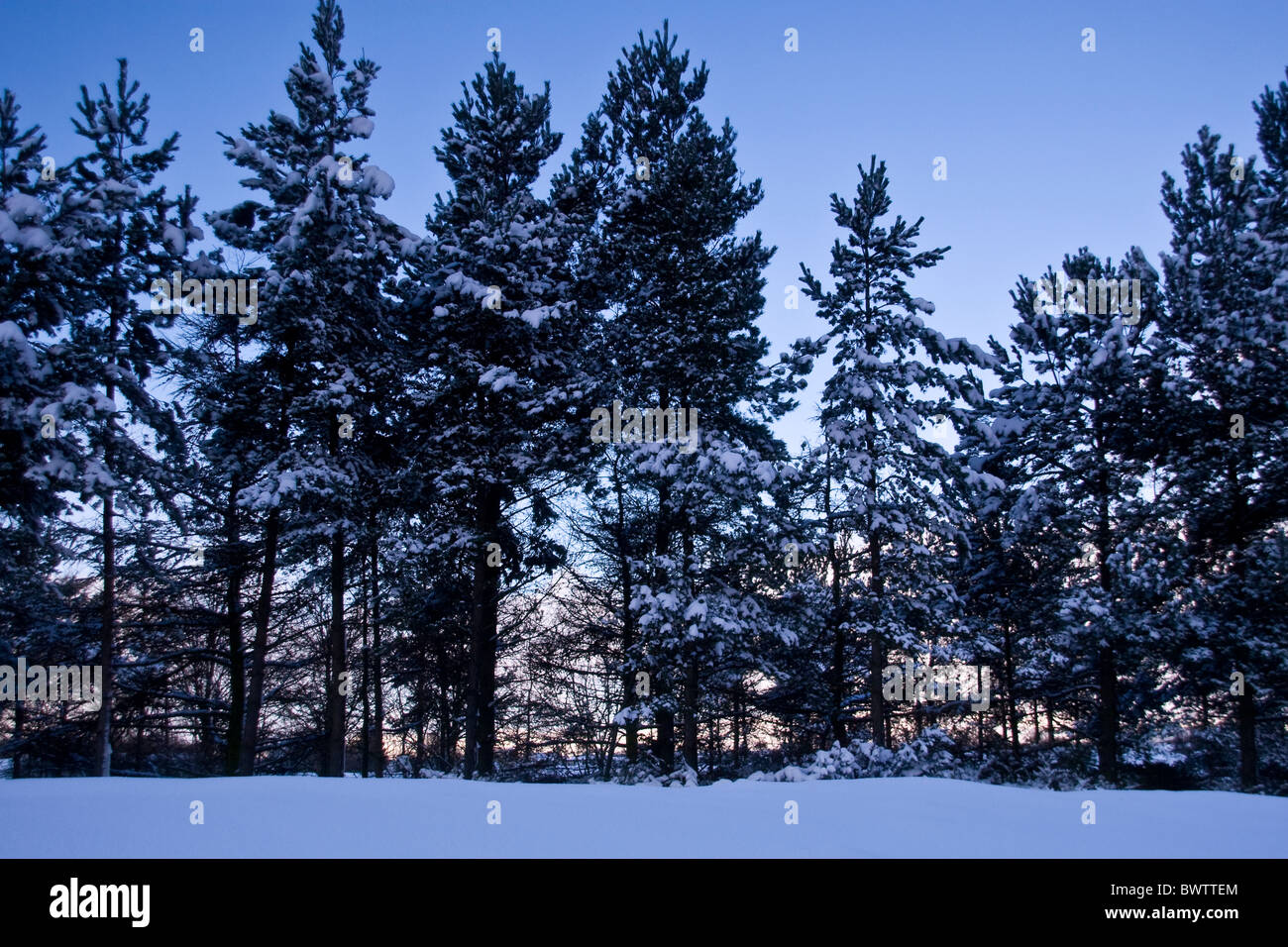 Sunset shining through snow covered trees in urban Dundee,UK Stock Photo