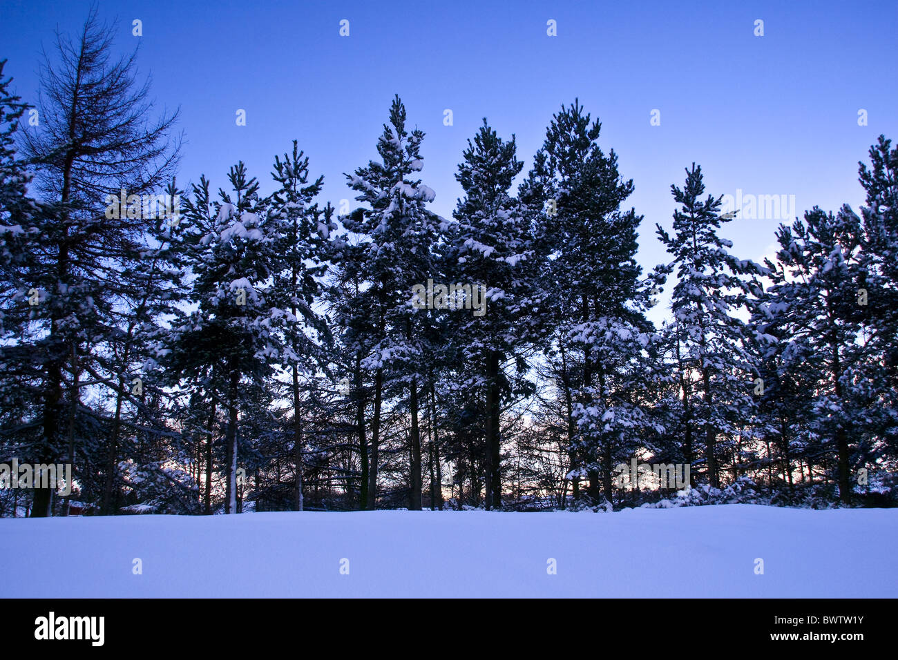 A winter sunset landscape with snow covered trees in urban Dundee,UK Stock Photo