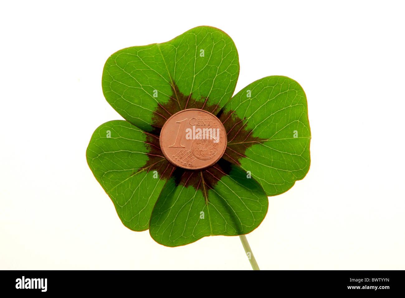 Four-leaf clover - Stock Image