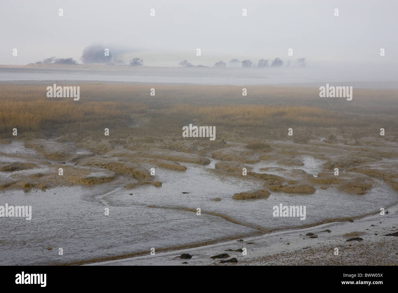 Early morning view of misty saltmarsh habitat, Levington Lagoon ...