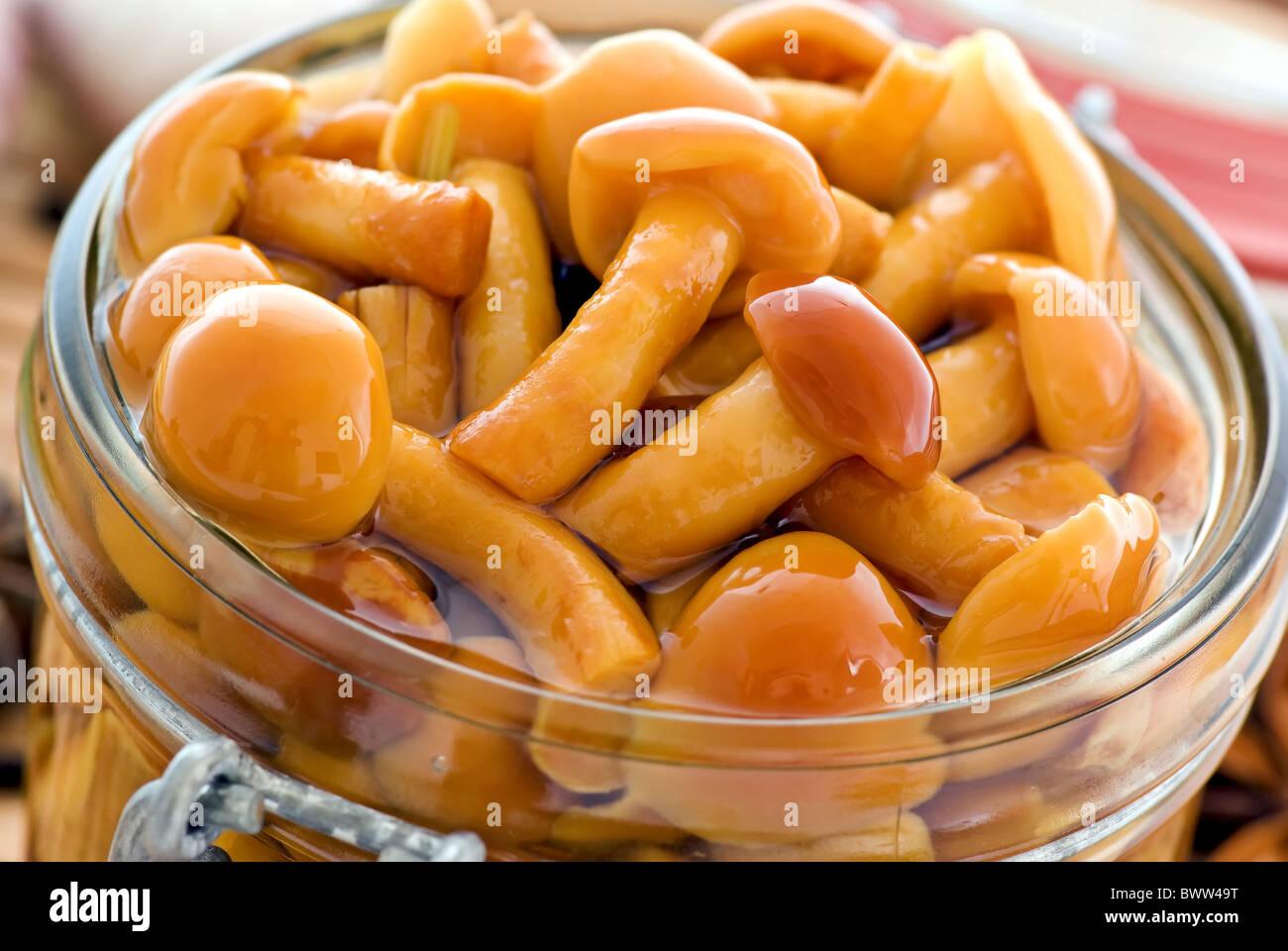Pickled honey agaric, recipe