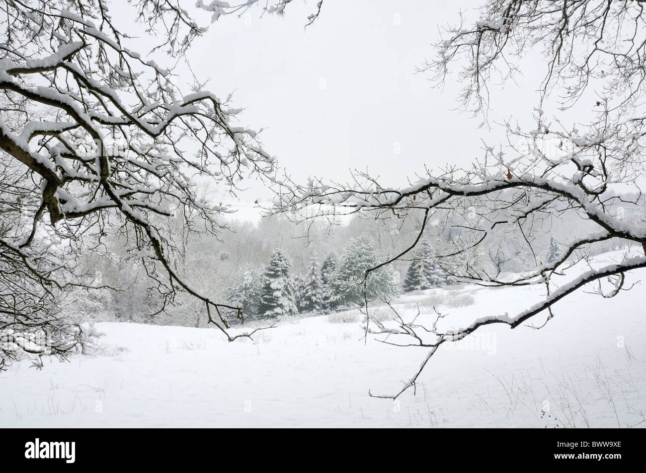 Snow covered trees and pastureland. Wiltshire, UK, January 2010. - Stock Image