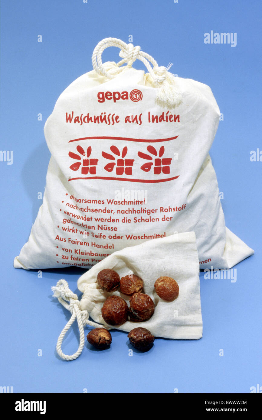 Soapnut, Soapberry (Sapindus mukorossi). Soap nuts contain saponin, a natural detergent which can be used to clean - Stock Image