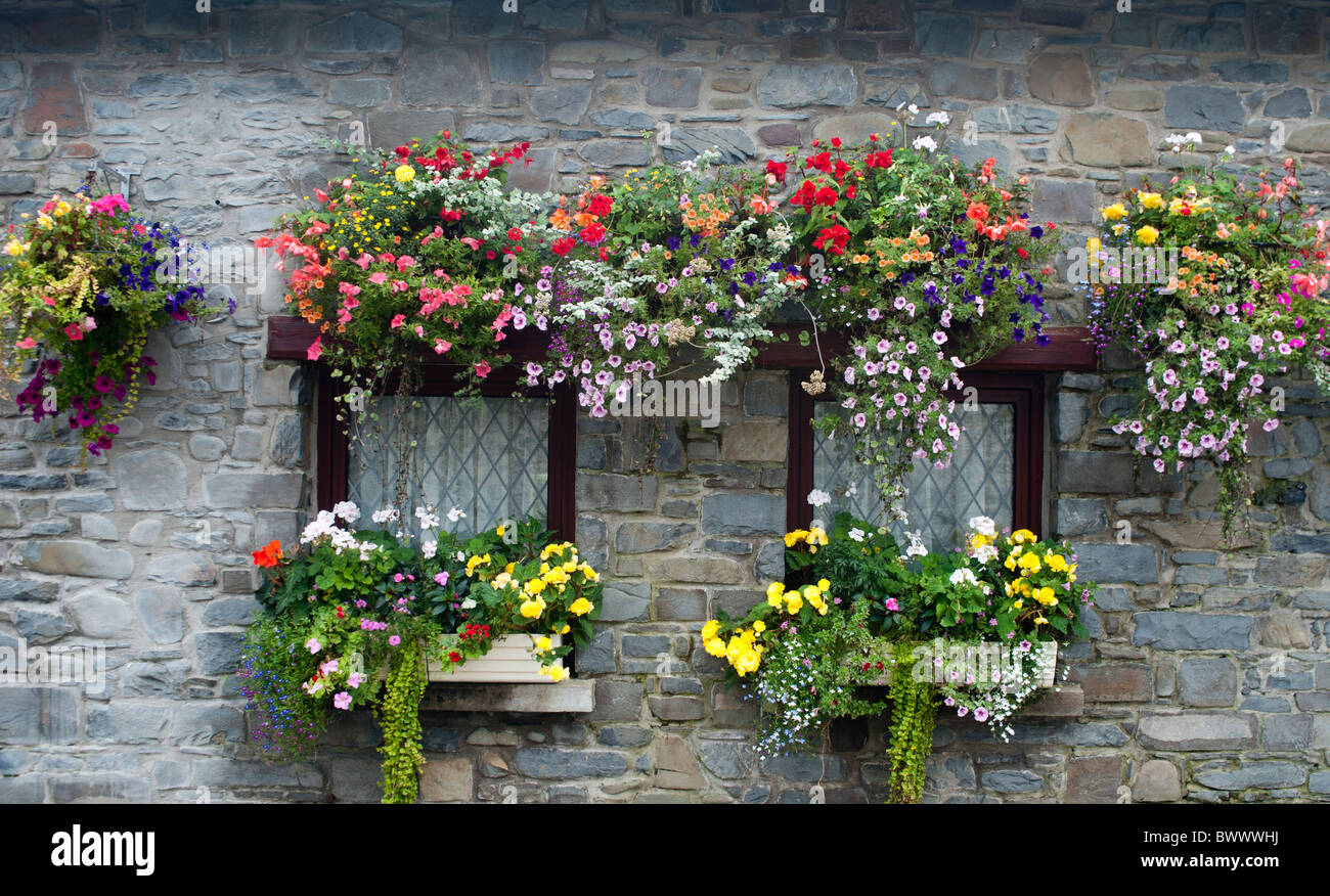 hagging baskets and window box in full bloom i - Stock Image