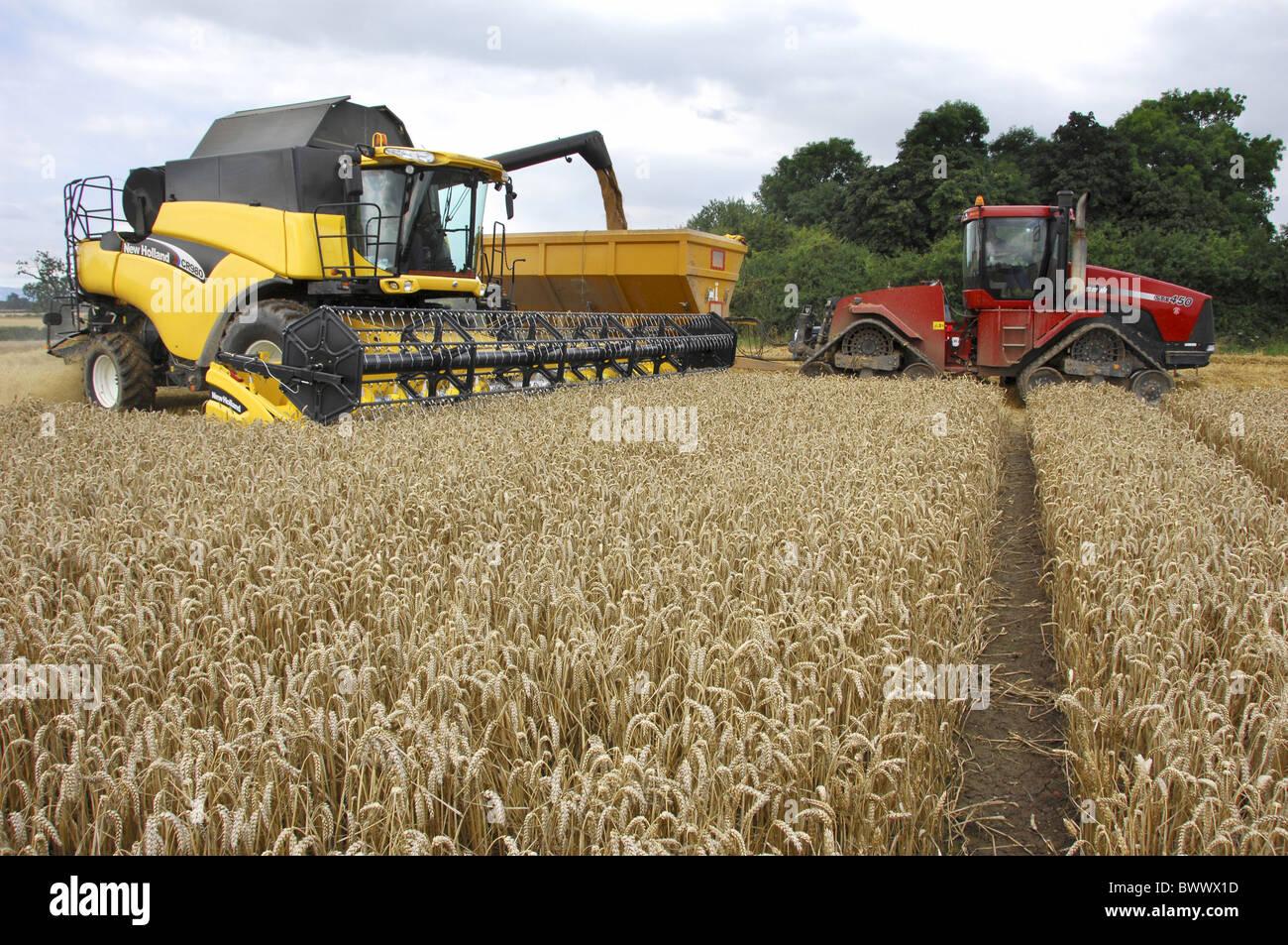 Wheat (Triticum aestivum) 'Alchemy', crop being harvested, New Holland combine harvester unloading into - Stock Image