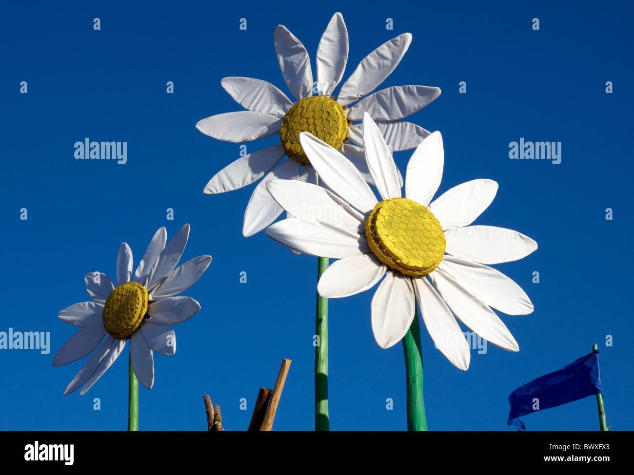 Giant Daisy Flowers Stock Photos Giant Daisy Flowers Stock Images