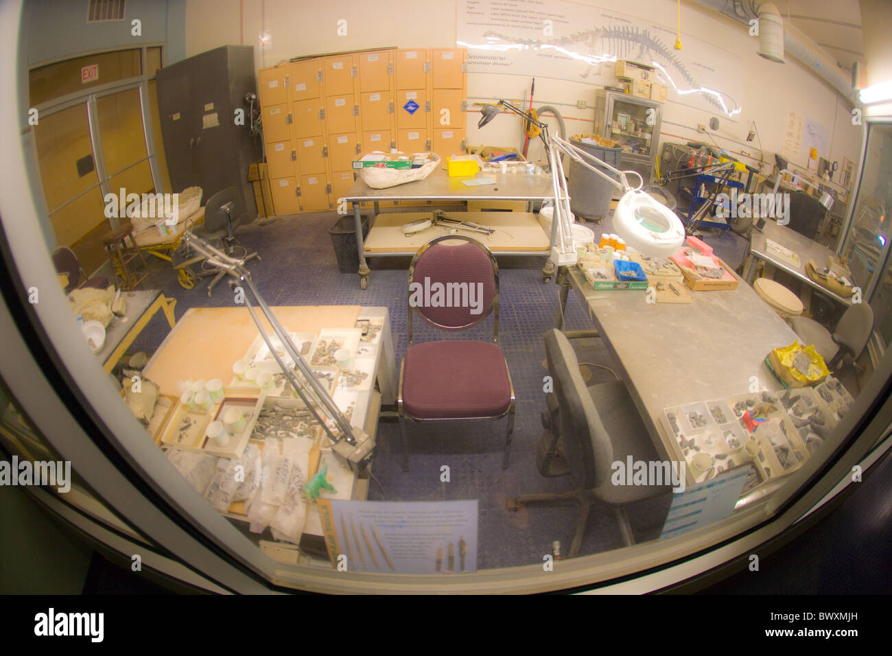 Looking through a window, inside a lab of archeologist, prehistoric bones, fossil, drills, measuring devices. - Stock Image