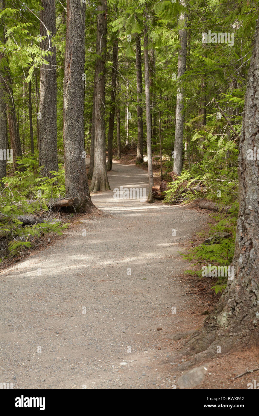 Track through forest to Spahats Falls, Wells Gray Provincial Park, British Columbia, Canada - Stock Image