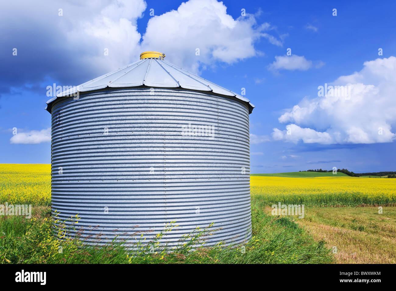 Grain storage silo and canola field.  Pembina Valley, Manitoba, Canada. - Stock Image