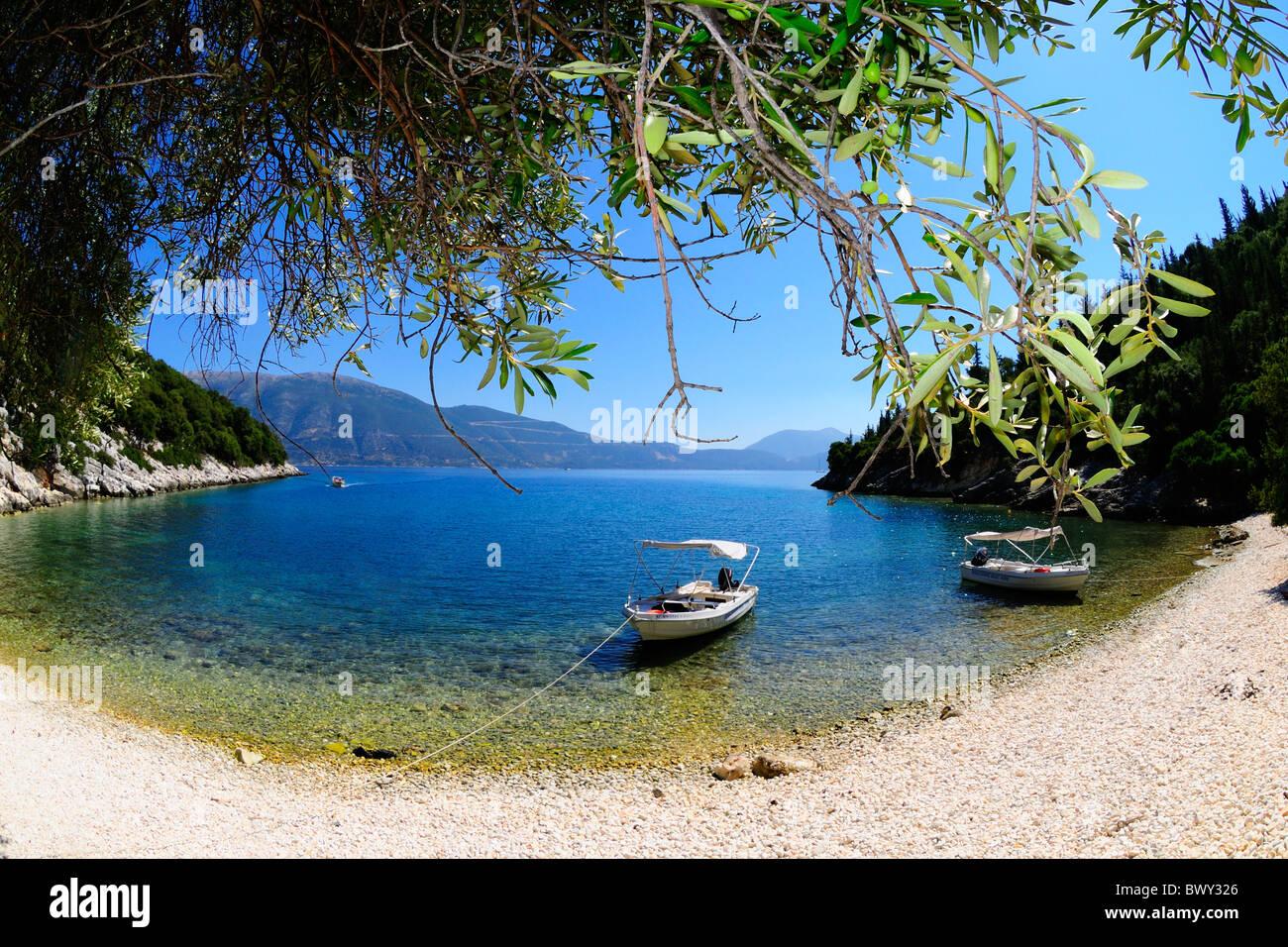 Olive Tree, Horgota Beach, Kefalonia Greece - Stock Image