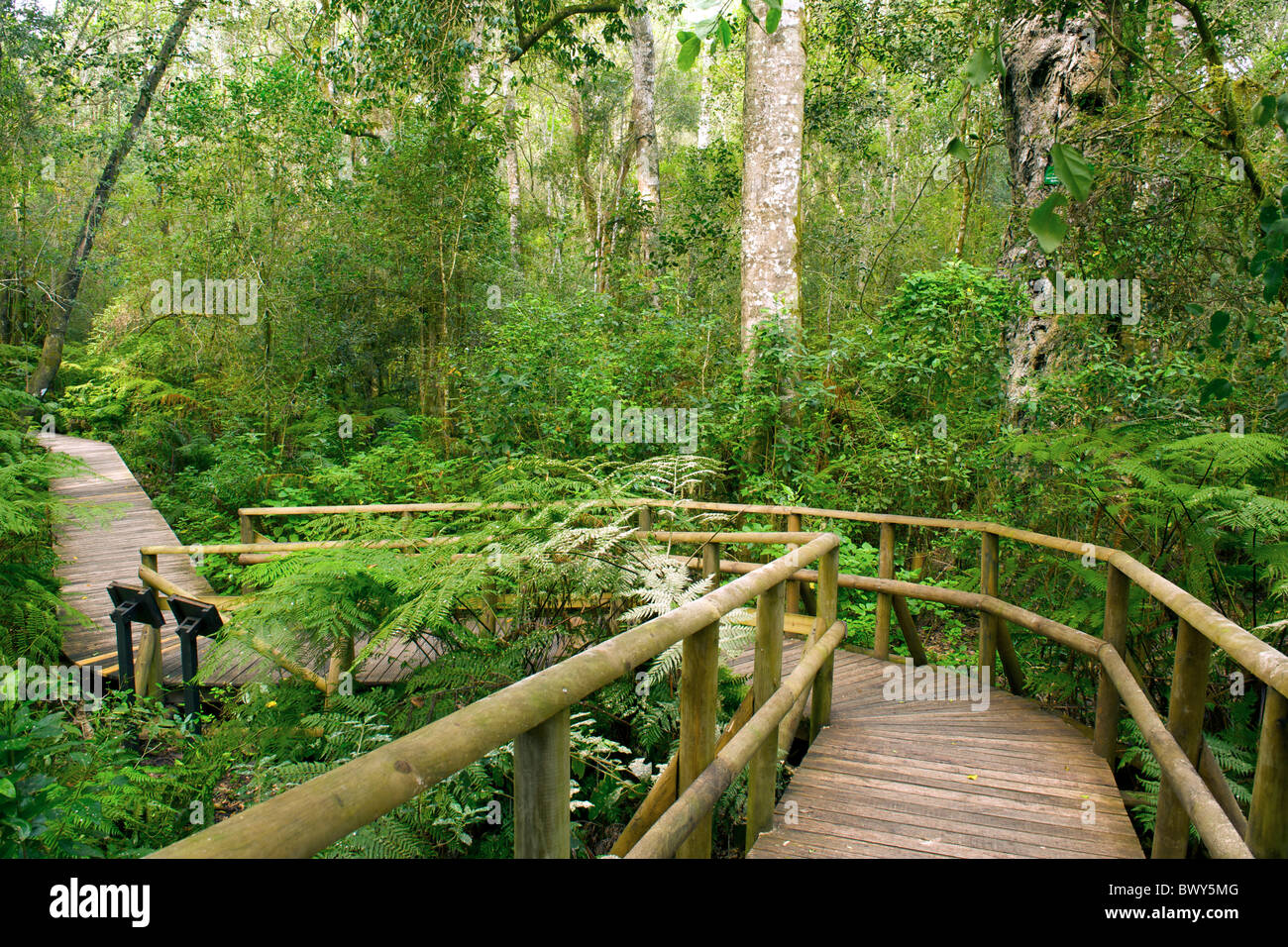 The Garden Of Eden Forest Walk In The Tsitsikamma Forest Near Stock Photo 33173968 Alamy