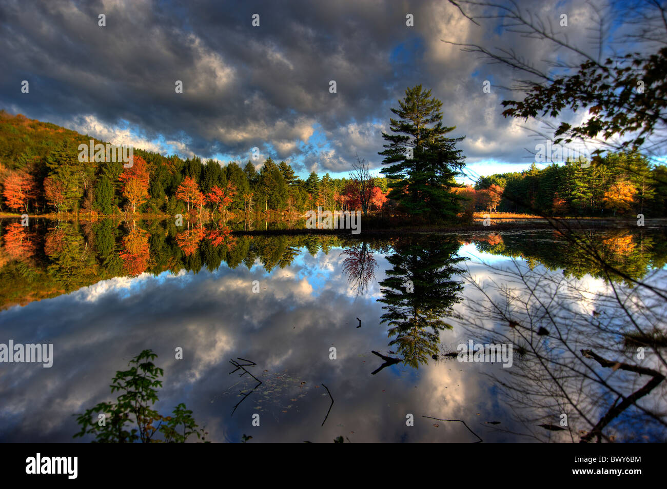 Fall Foliage - Stock Image