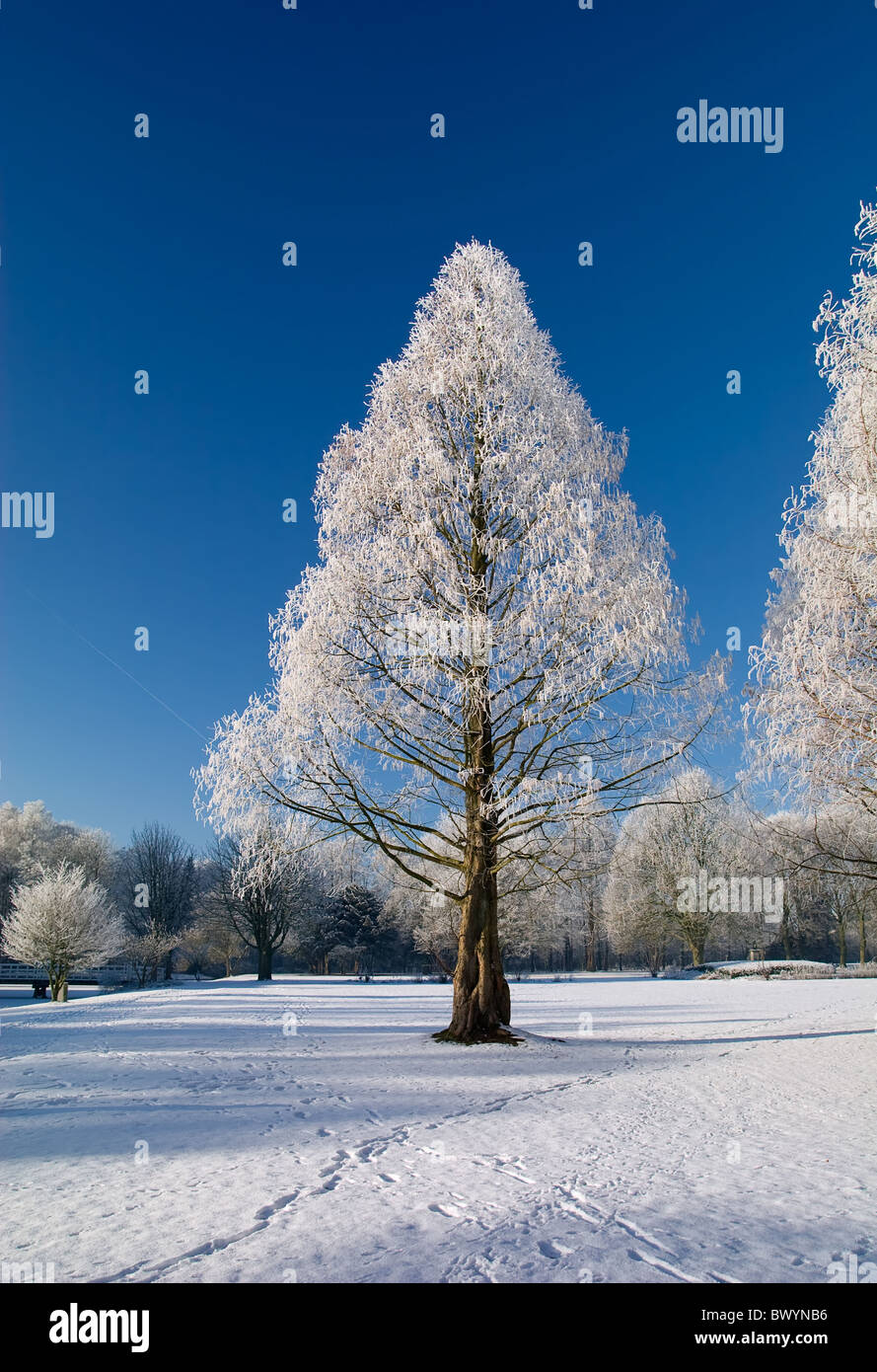 Winter park in snow with blue sky and white trees Stock Photo