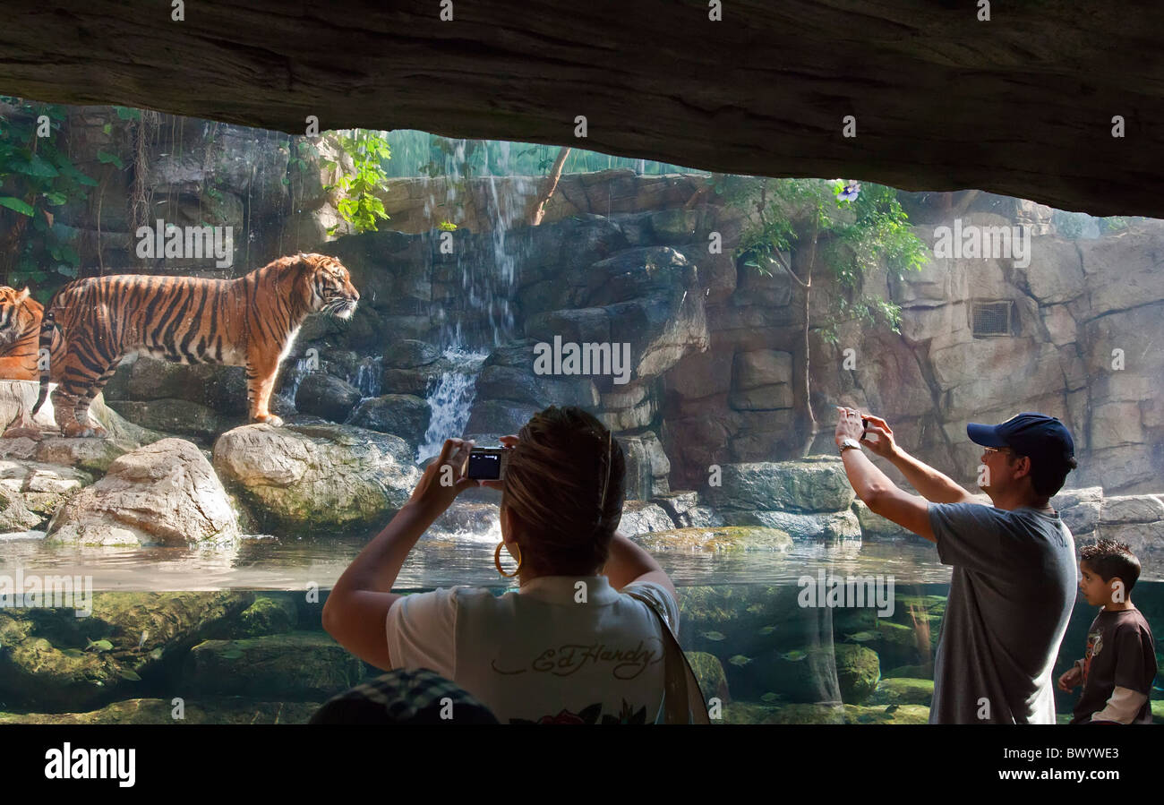 Denver Aquarium High Resolution Stock Photography And Images Alamy