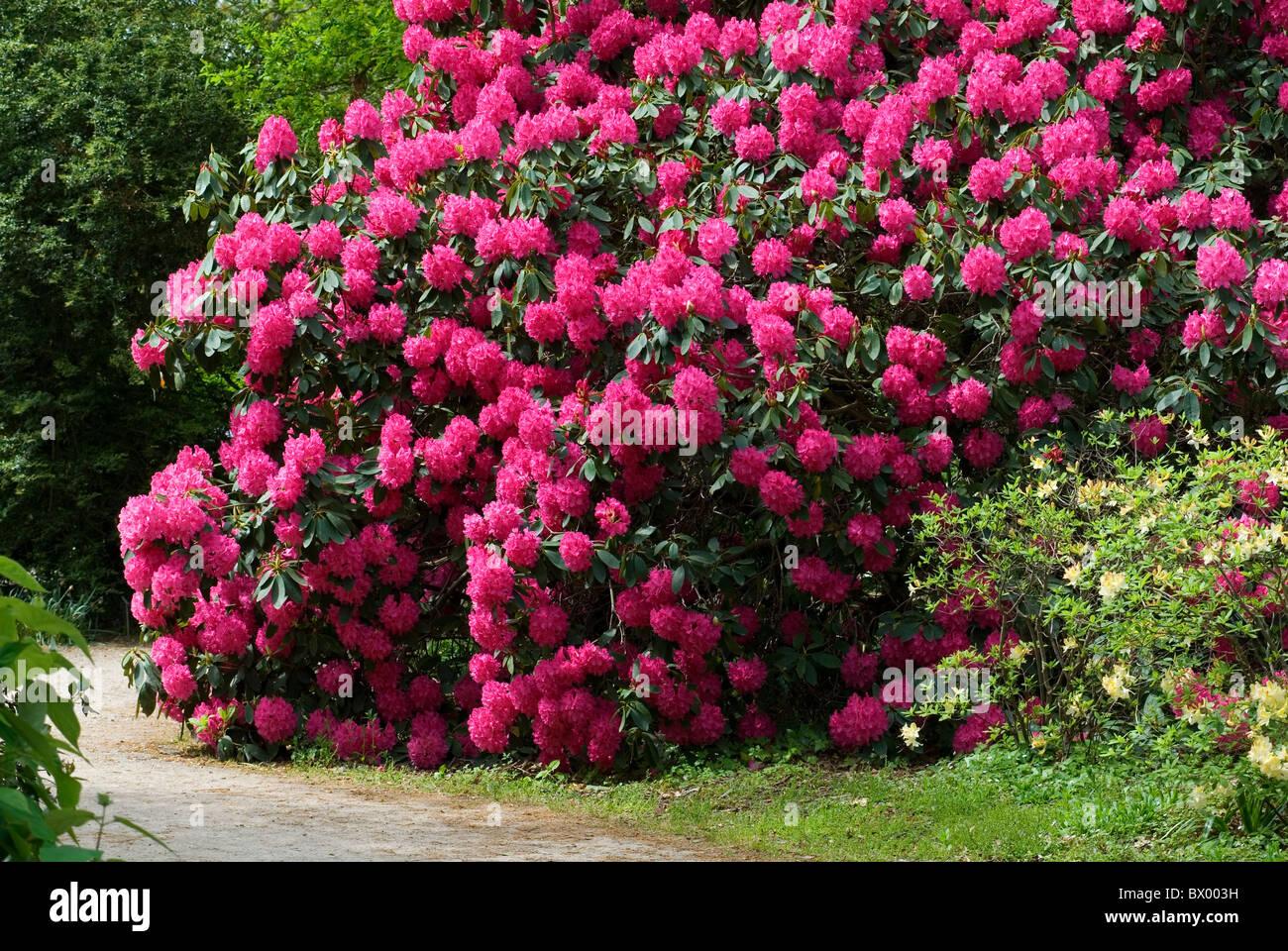 Cynthia Flowers Nude Photos 94
