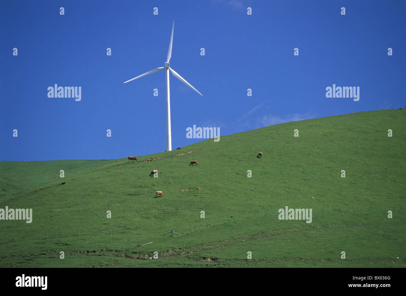Australia Toora Victoria Windmill wind electricity energy hill industry cattle powerplant propeller airs - Stock Image