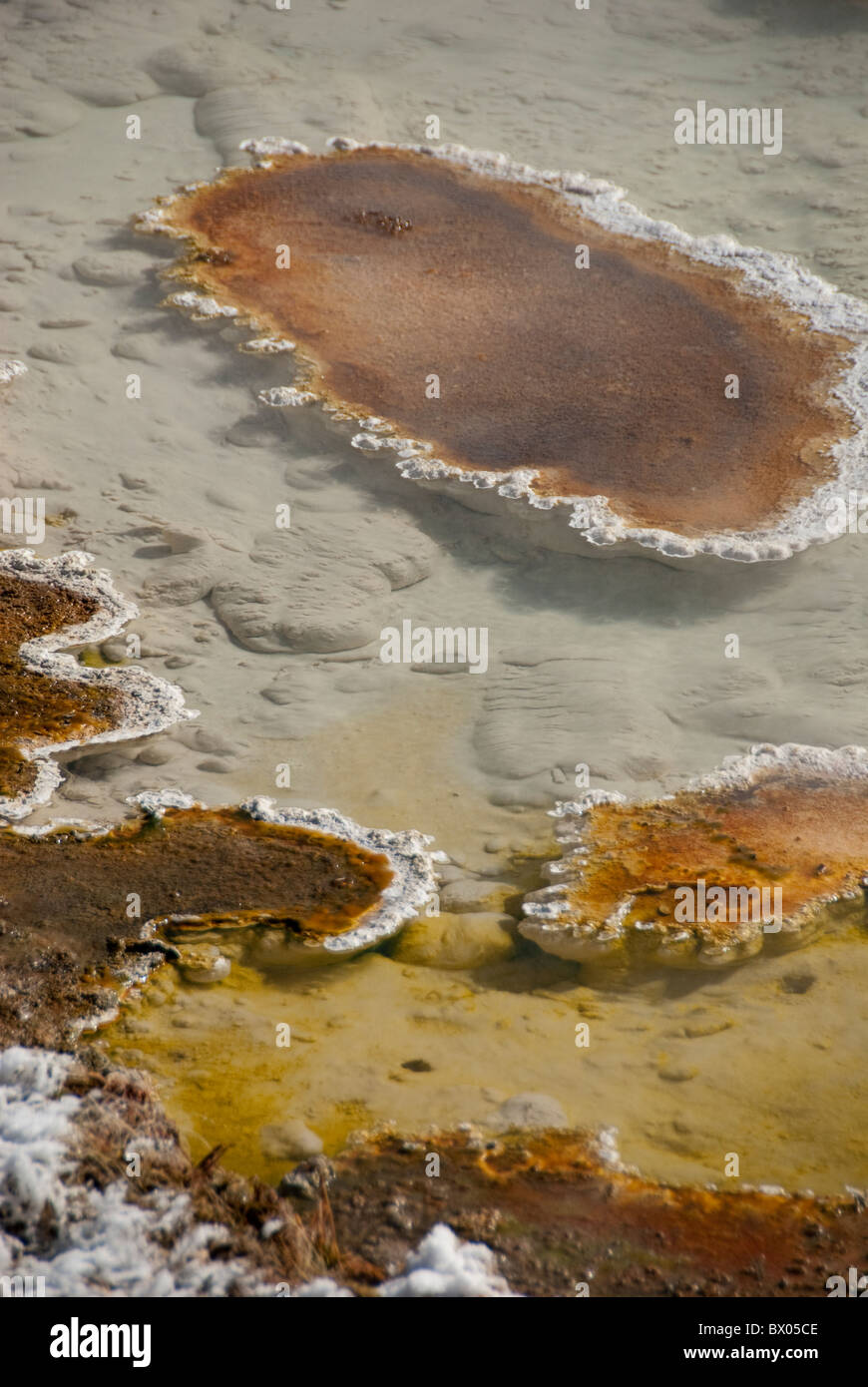USA, Wyoming. Yellowstone National Park. Fountain Paint Pot area. Geothermal features, thermophile bacteria mat. - Stock Image