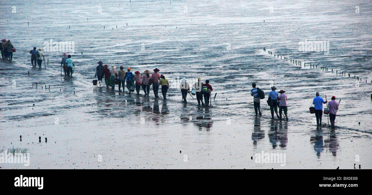 Fishermen to cultivate sea produce from shoal, Xiapu, Ningde, Fujian Province, China - Stock Image