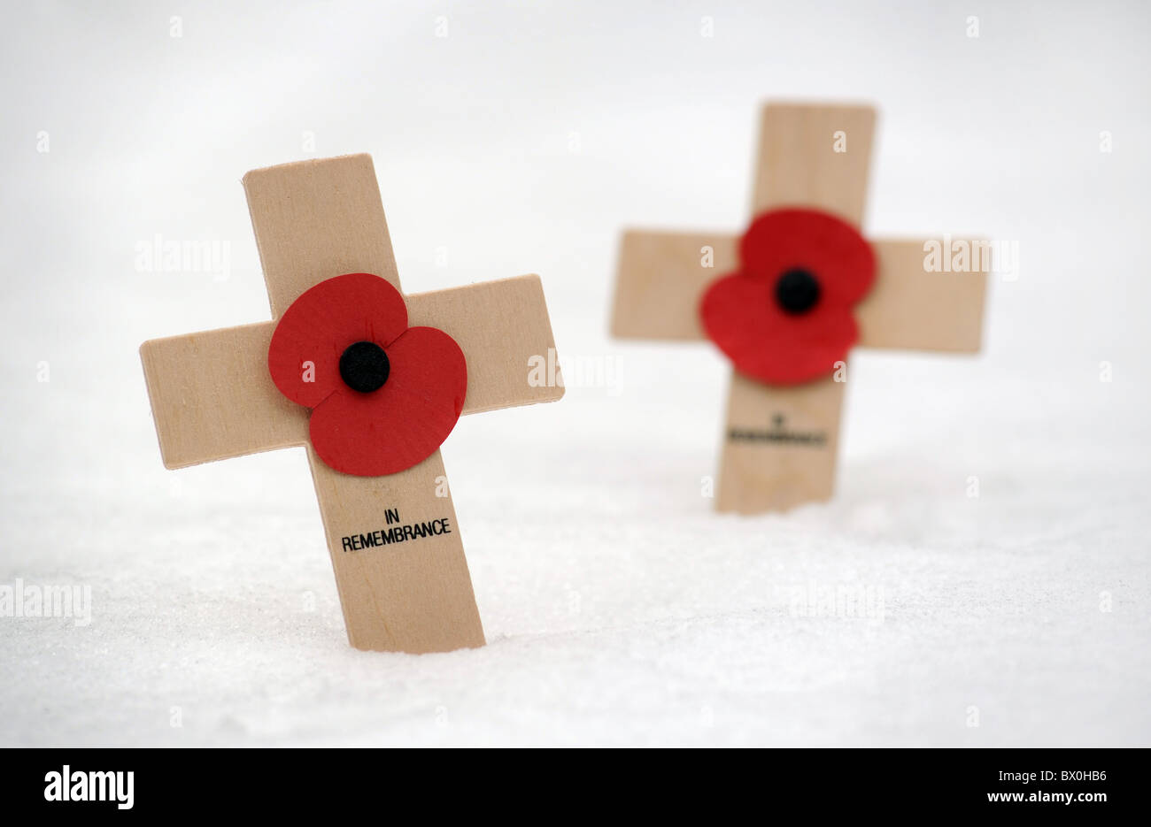 BRITISH REMEMBRANCE DAY POPPIES IN SNOW - Stock Image