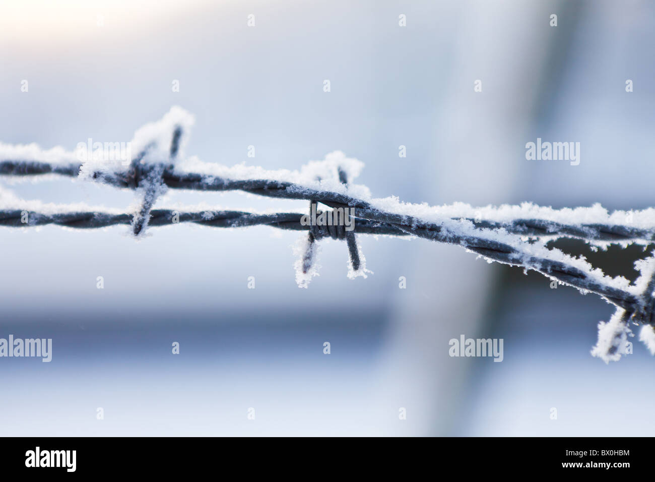 barbed wire covered in frost Stock Photo
