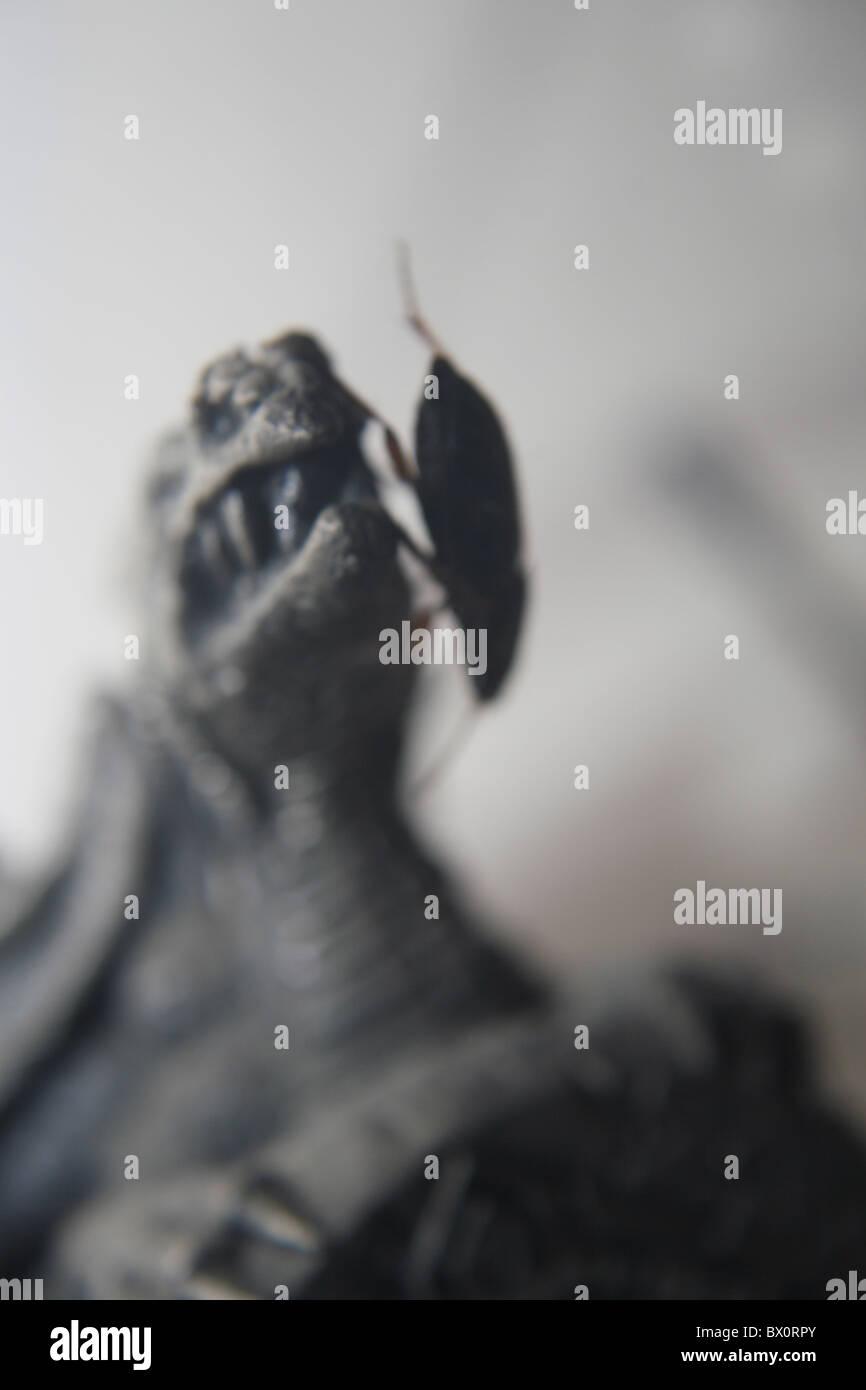 common ground beetle on myth & magic ornament - Stock Image