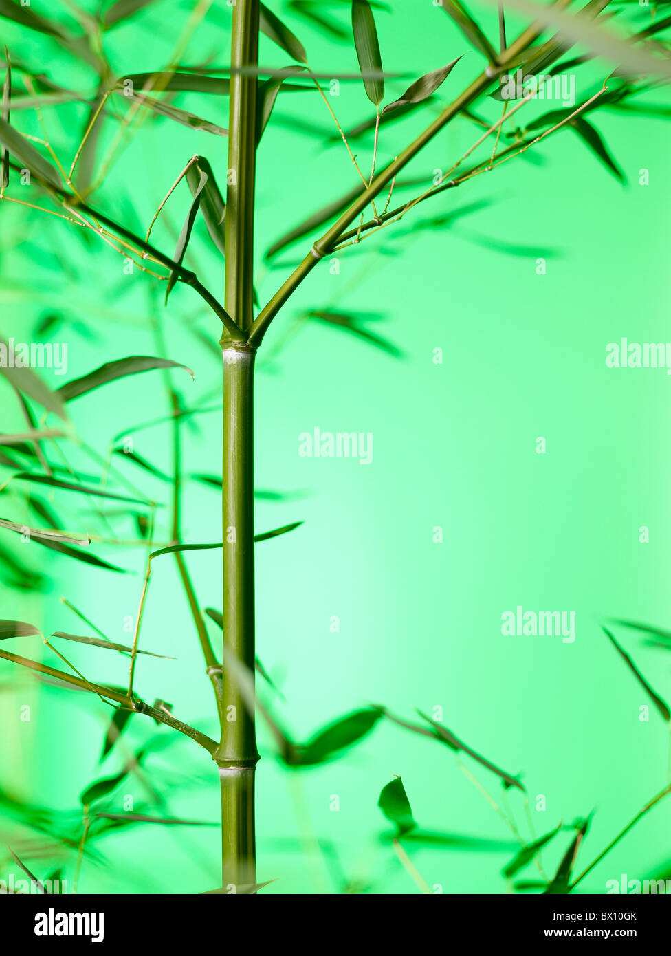 Bamboo stalk vertical - Stock Image