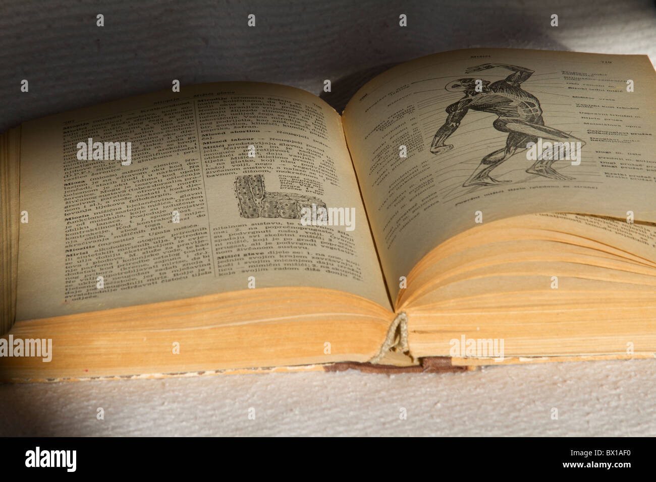 open book with human body picture - Stock Image