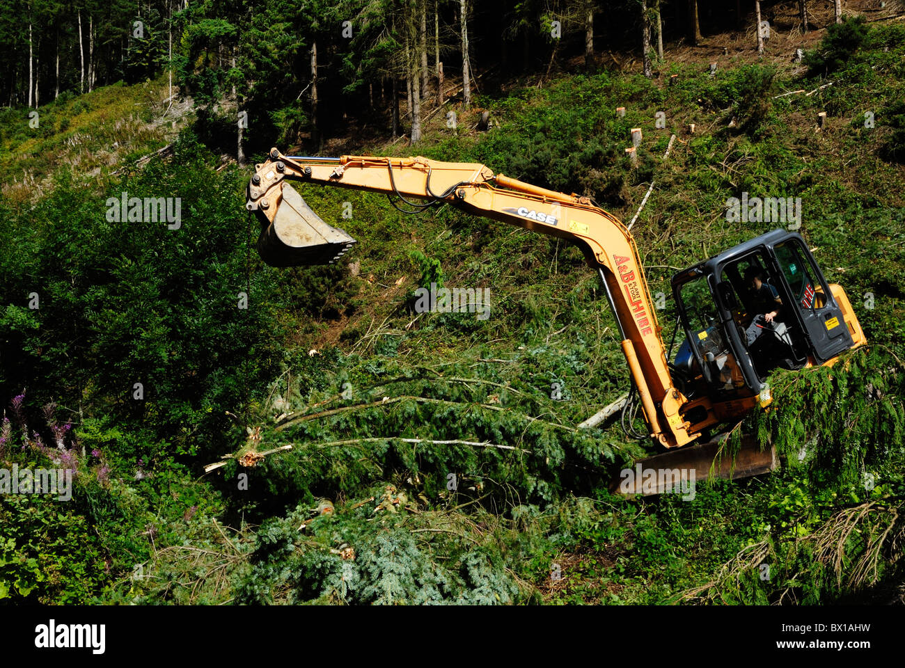 Tracked excavating machine, clearing ground in woodland, Wales - Stock Image