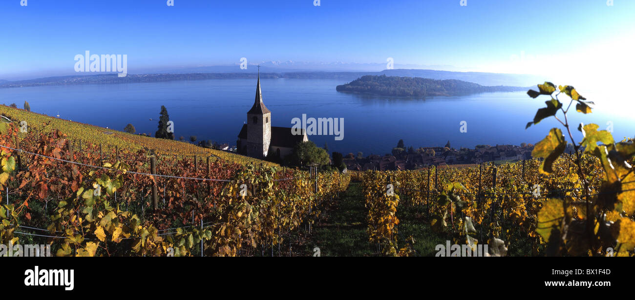 Ligerz village church wine vineyard shoots lake Bielersee Seeland Canton Bern Berne Switzerland Europe au - Stock Image