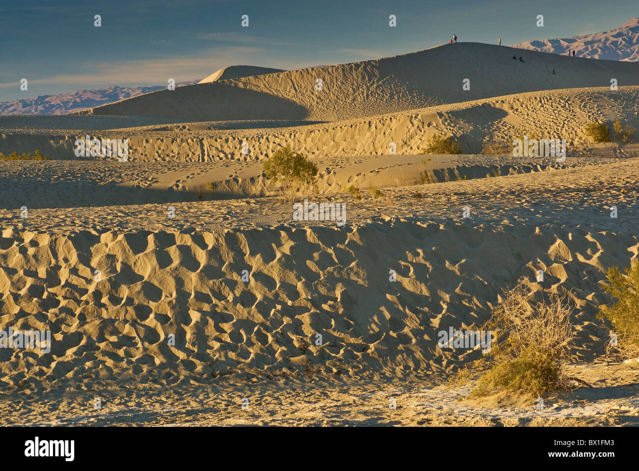 Mesquite Flat Sand Dunes marred by footprints at sunset, Death Valley National Park, California, USA - Stock Image