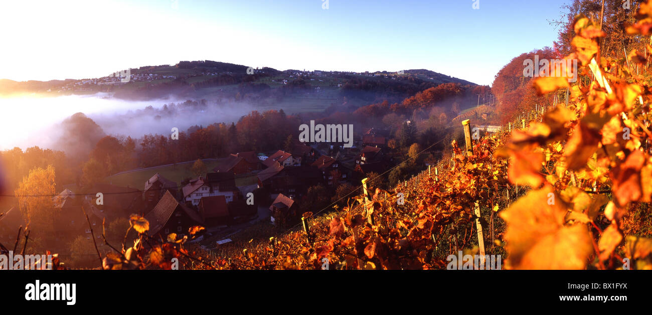 Wienacht village settlement autumn scenery landscape vineyard wine shoots fogs mood dusk twilight Appenze - Stock Image