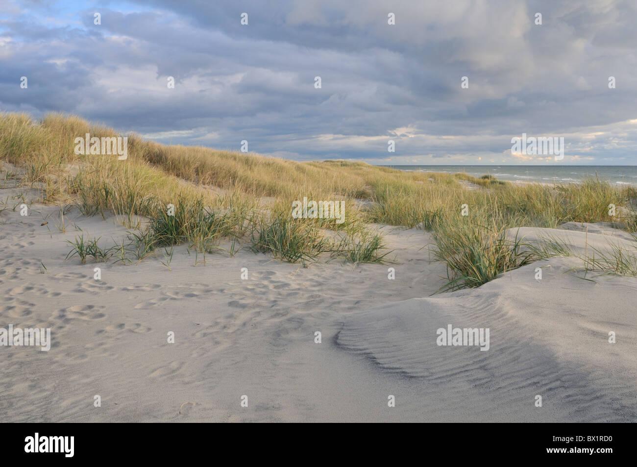 Shifting sand dunes cover the excellent beach Sandhammaren, Sweden - Stock Image