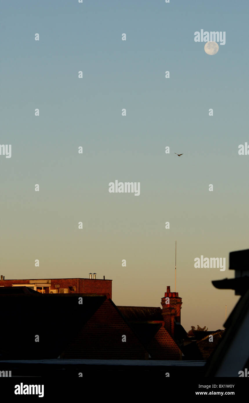 Moon and a bird above rooftops during an early morning sunrise - Stock Image