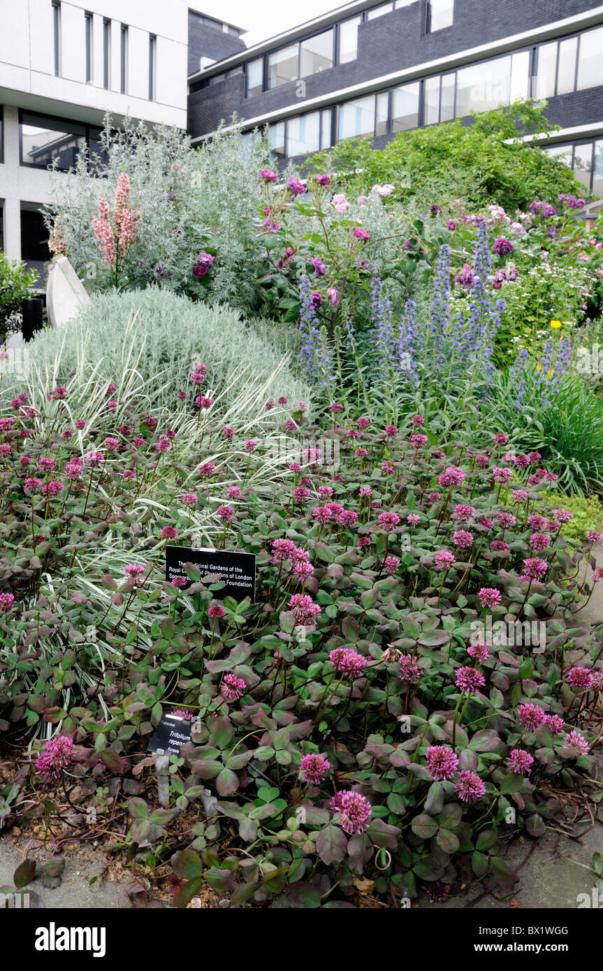 Medicinal garden at the Royal College of Physicians London England UK - Stock Image