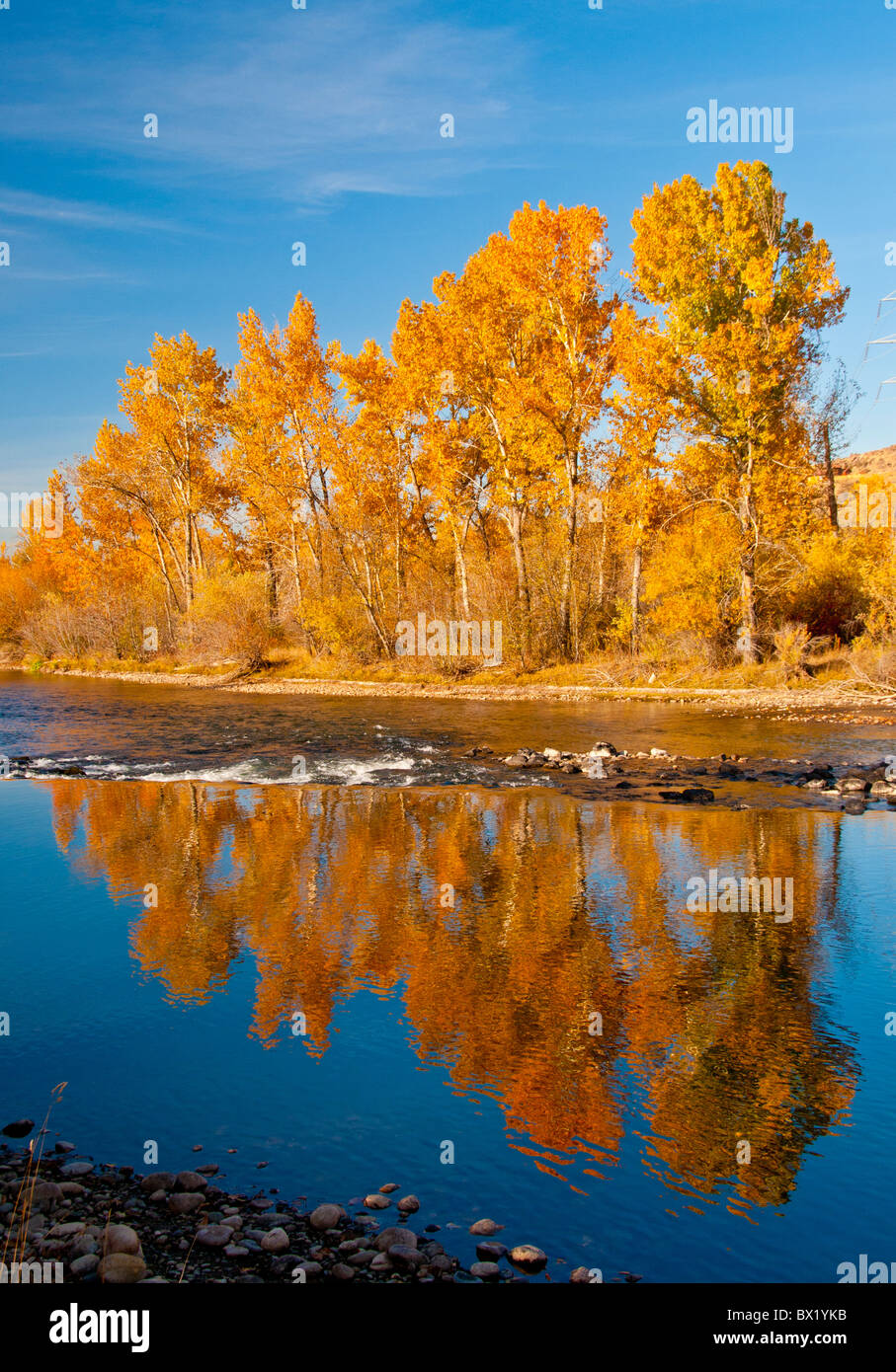 USA, Idaho, City of Boise, Cottonwood trees reflecting fall colors in the Boise River, Boise River Greenbelt. - Stock Image